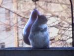 acrobatic squirrel 01