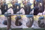 acrobatic squirrel 03